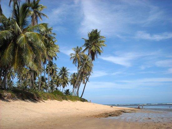 Hotel Eco Atlântico: Praia do Forte. Mar tibio y altas palmeras