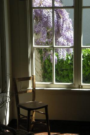 Mary's Bed and Breakfast: Wisteria seen from the kitchen