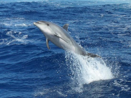 Eden Catamaran: Bottlenose dolphin