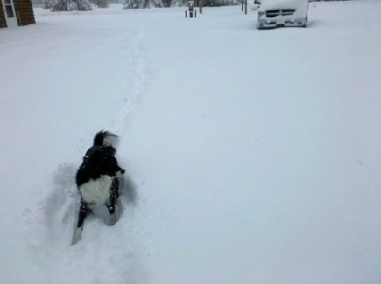 Appalachian Cabins : Fun in the snow
