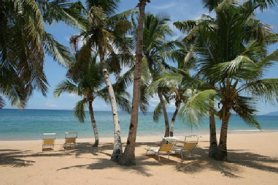 Eden Lodge: Rest under coconuts.