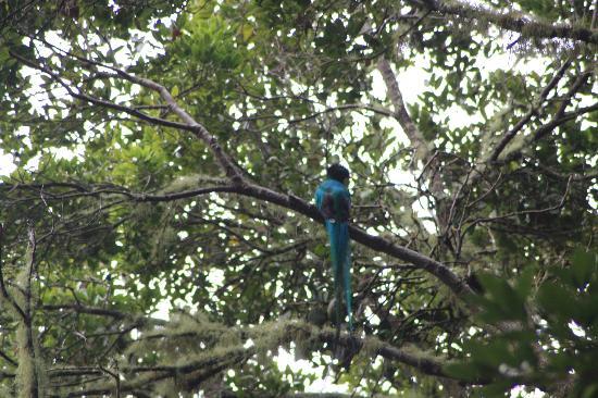 Boquete Garden Inn: Quetzal