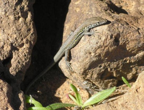 Timanfaya National Park: Lanzarote 2010