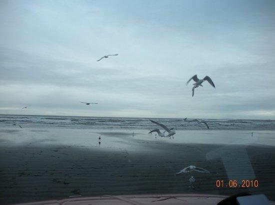 Coastal Serenity Foto