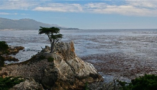 Seaside, Californie : The  Lone Cypress, 17-Mile Drive, California