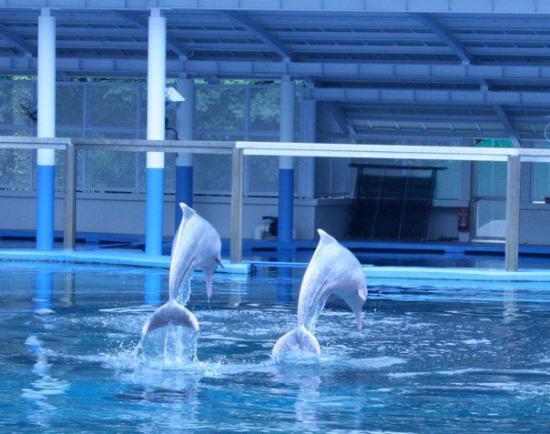 Underwater World and Dolphin Lagoon: IMG_9366
