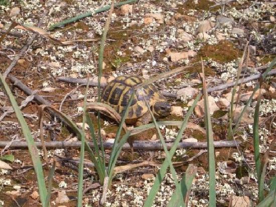 Son Verd : Ein Traum..dort leben viele freie Schildkröten.