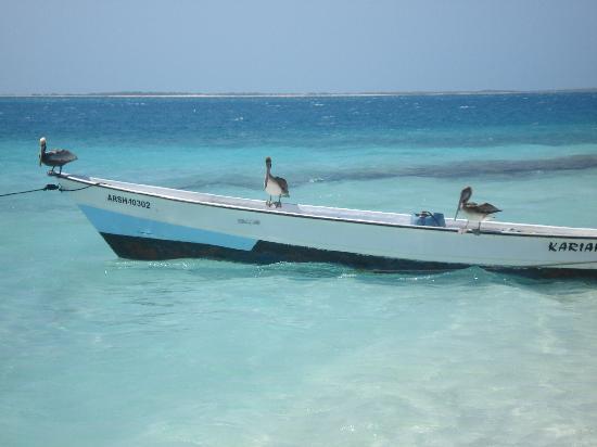 Posada La Langosta: Spiaggia