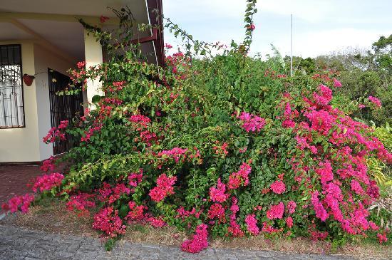 La Catalina Hotel & Suites: Flowers everywhere!