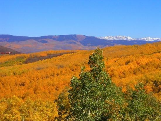 Fall colors near Eagle, CO