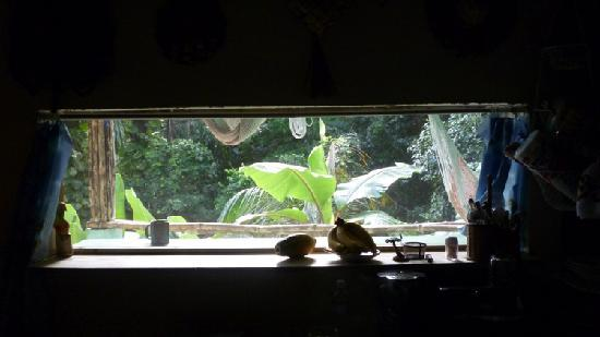 Carole's Rainforest Villas : The view out the bedroom window.