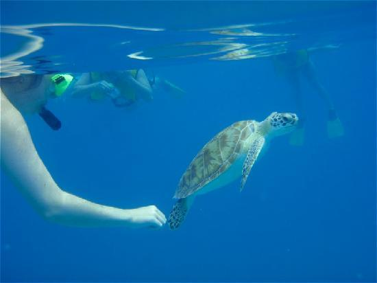 Good Day Charters: Swimming with the sea turtles