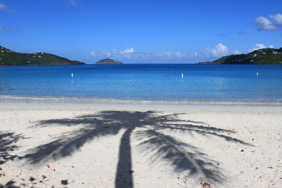 Magens Bay : palm reflection