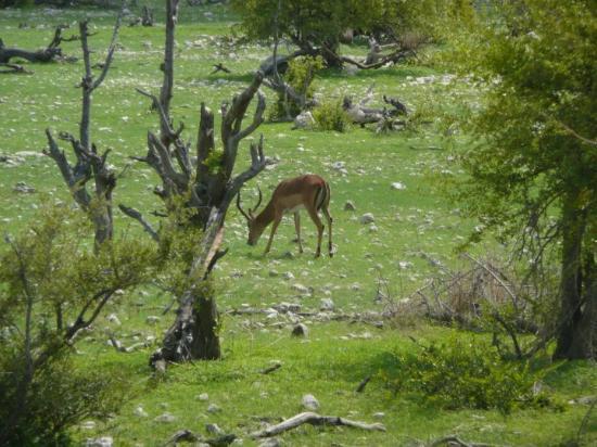 Swakopmund Image