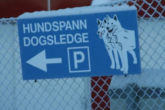 Luleå, Sverige: Gotta know where you left your dogsled!