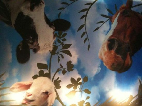 Padre Hotel: Farmacy Cafe's ceiling brings a smile