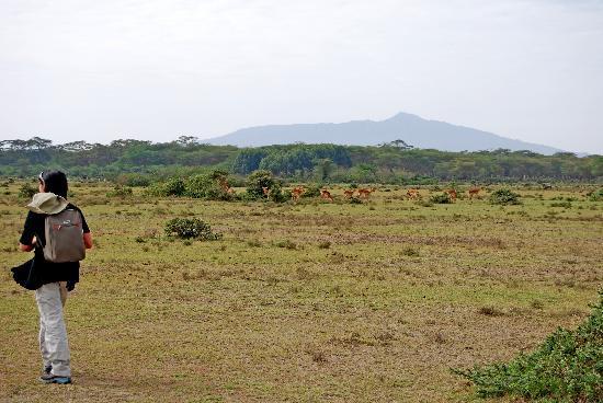Provincia del valle del Rift, Kenia: Caminando por Crescent Island