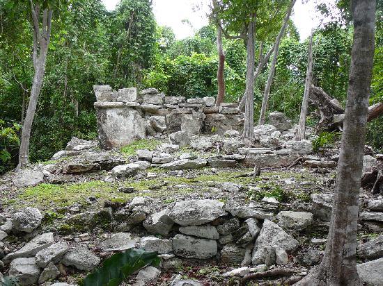 Dr. Alfredo Barrera Marin Botanical Garden: Mayan Ruins