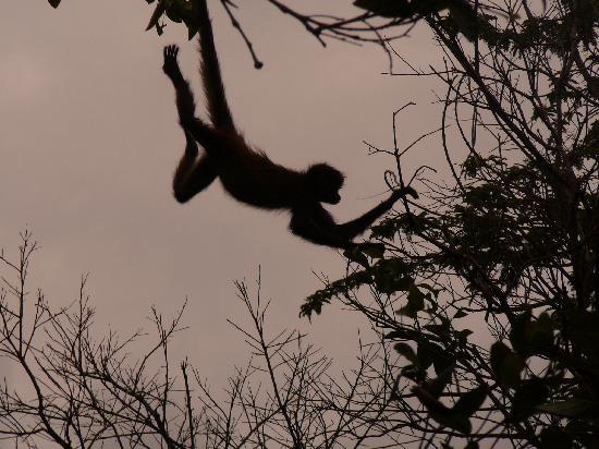 Dr. Alfredo Barrera Marin Botanical Garden: Monkey in motion