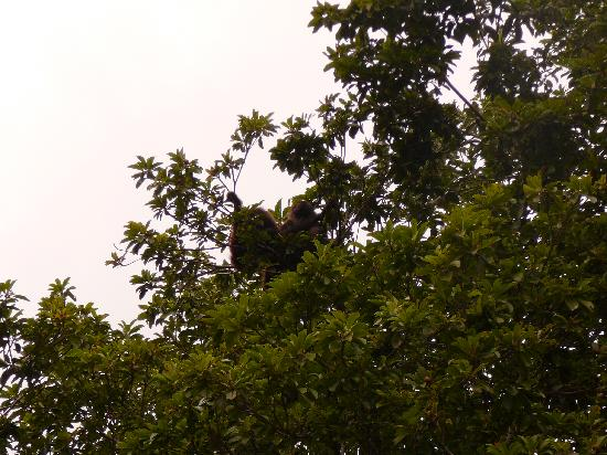 Dr. Alfredo Barrera Marin Botanical Garden: Mama and baby monkey