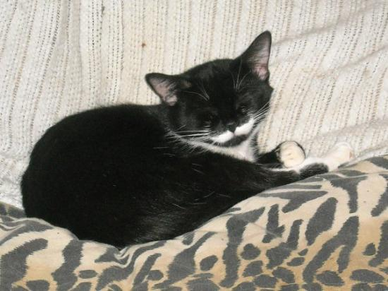 Kerrville, TX: This one I couldn't pass up, this is our newest cat, cat #10, her name is Little lady, and cause