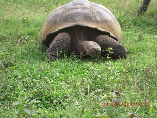 Finch Bay Galapagos Hotel: reserva de tortugas