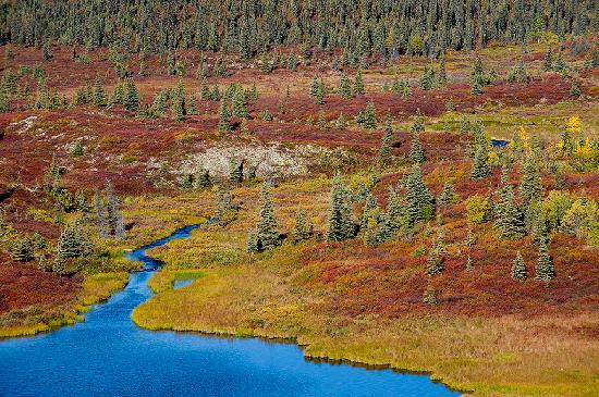 Kantishna Roadhouse: Fall Colors (Wonder Lake) looking toward Kantishna