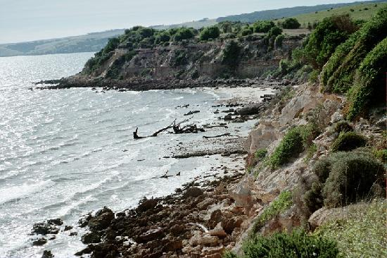 The Fig Tree: The Cliff Top Walk