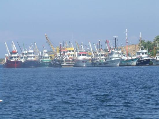 Foca, Turquia: Fishing boats on Agean Sea