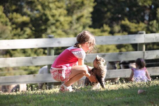 Kauri Villas: Kinderfreundliche Tierwelt