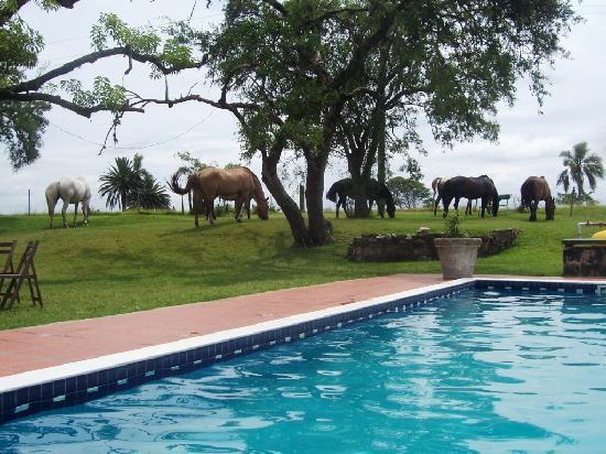 San Pedro de Timote: Pool