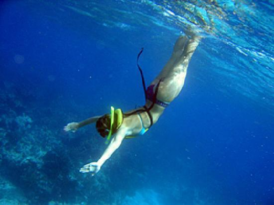 Keys Diver Snorkel & Scuba (Key Largo)