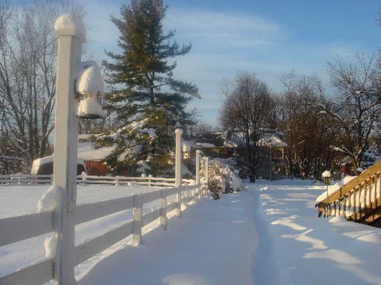 Fallen Tree Farm Bed and Breakfast: Snowy!