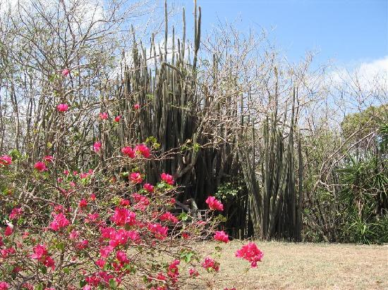 L'habitation de l'Ilet Thierry: le jardin