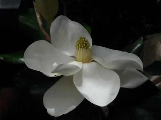 Swan Lake Iris Gardens Photo