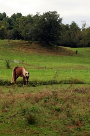3 Corner Field Farm - Shushan, New York