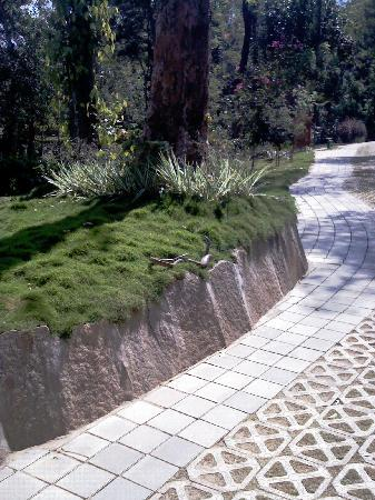 The Windflower Resort and Spa, Coorg: 2 Snakes just next to the walkway by the rooms
