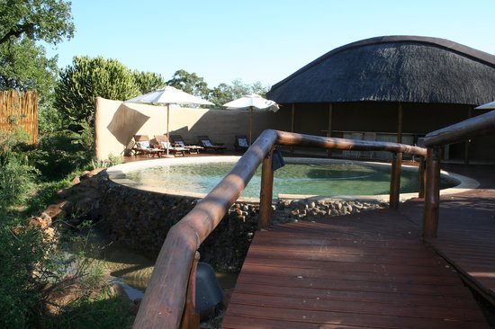 Shishangeni Private Lodge: piscina