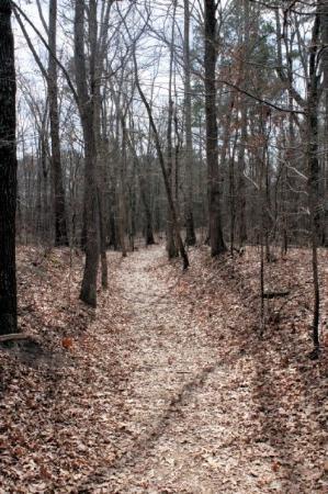 ตูเปโล, มิซซิสซิปปี้: This is a stretch of the Old Natchez Trace just outside of Tupelo, Mississippi. Centuries old, t
