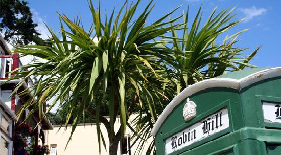 The Robin Hill Hotel: Sun and Palm Trees - the English Riviera!