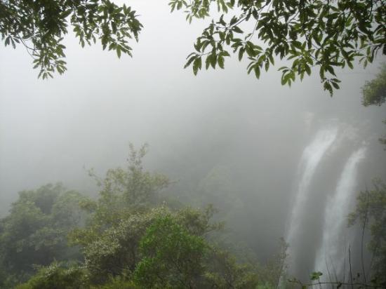 Springbrook, Австралия: Twinfalls - foggy