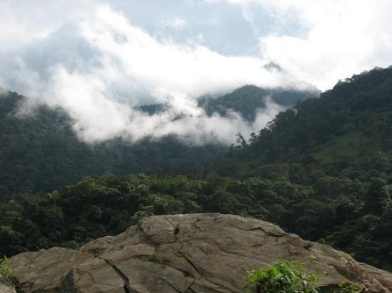 Zamora, Ecuador: Podocarpus