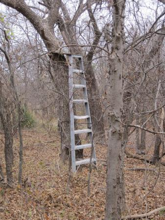 Red Neck Tree Stand Ladder Plywood And Bungee Cords