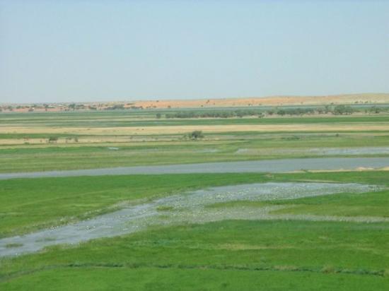 Gao, Мали: riz flottant ou bourgout sur le Niger
