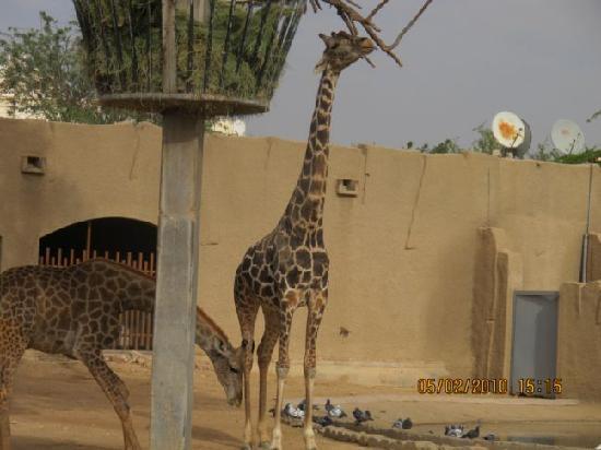 riyadh zoo 3