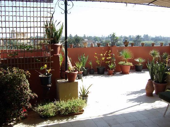 Mara House: Mara's rooftop garden