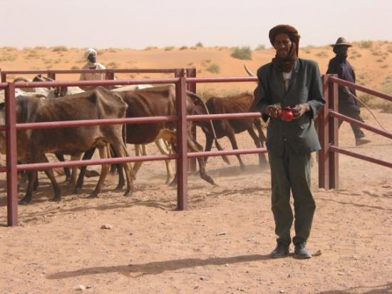 Gao, Mali: Gabero : le thé pendant la vaccination