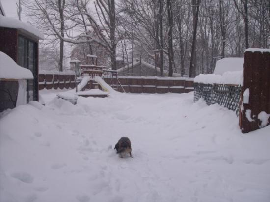 Waynesboro, VA: thomas again playing in the snow 2010
