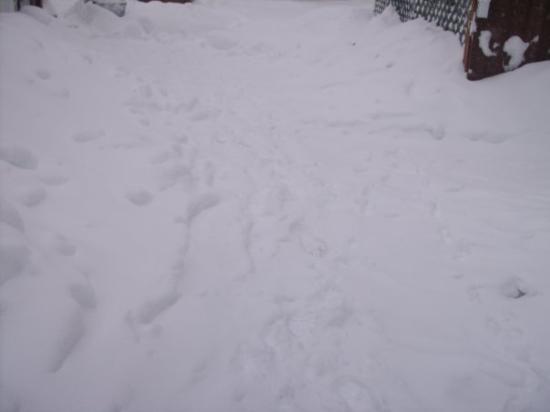 Waynesboro, فيرجينيا: snow snow snow 2010
