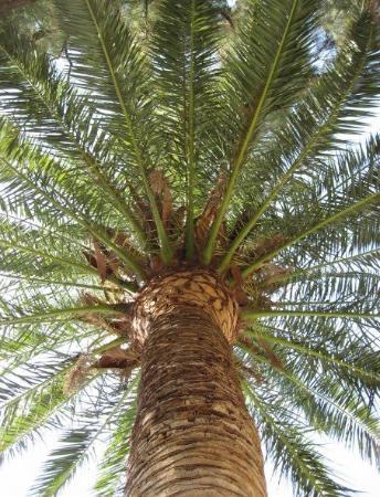 Benicásim, España: Felix har en fashination för palmer, och visst är det vackert.